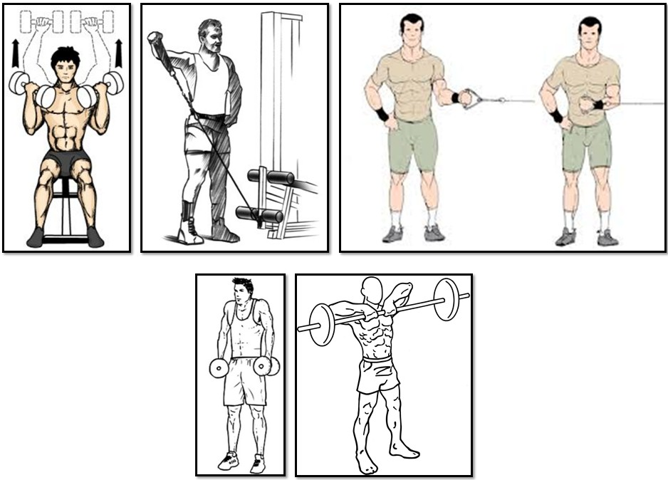 The training program for the ectomorph  What is it? - Body