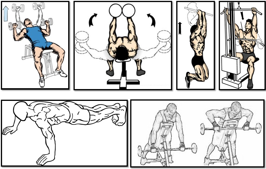The Training Program For The Ectomorph What Is It Body
