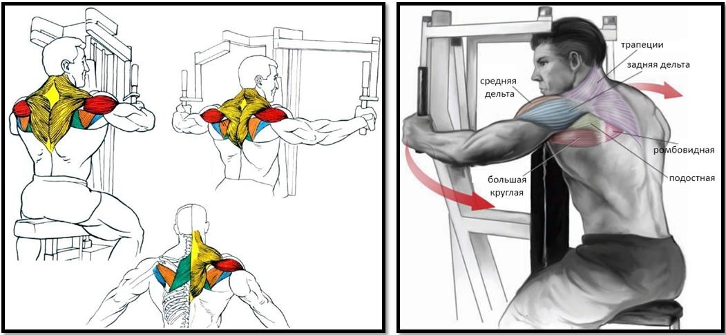 Разведение рук в тренажёре. Полный мышечный атлас.