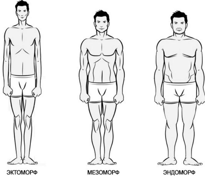 Питание в зависимости от типа телосложения