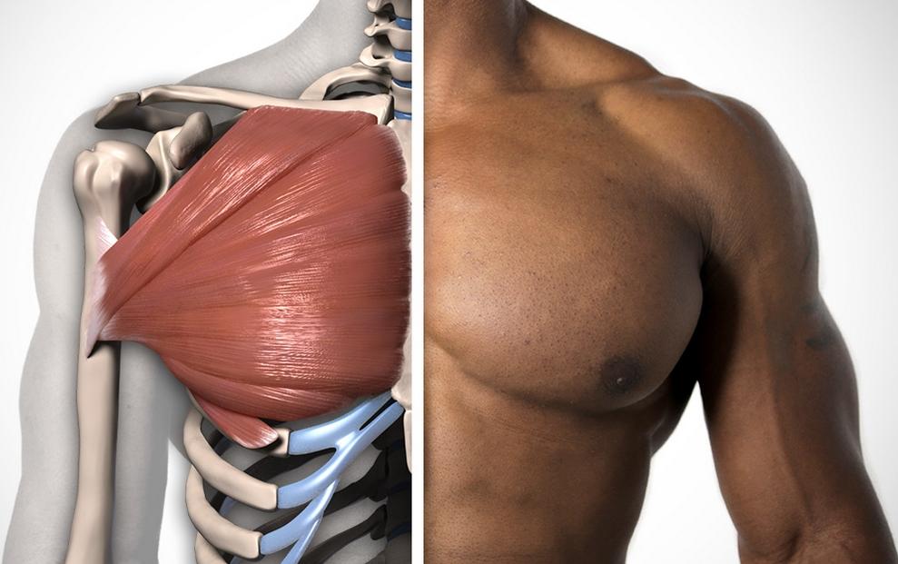 Как расширить грудную клетку фото