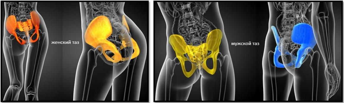 Женский и мужской таз: костная структура
