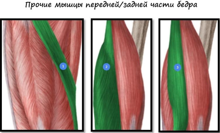убрать жир внутренней стороны ляшки
