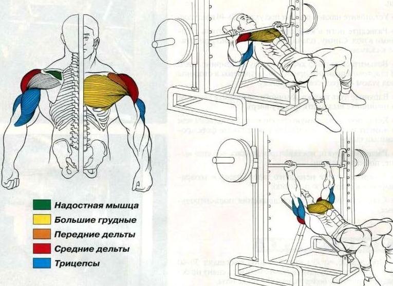 Наклонный жим в тренажере: анатомия упражнения
