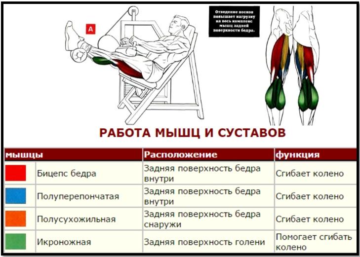 Сгибание ног сидя мышцы в работе