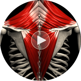 Интерактивный комплекс по технике выполнения упражнений, видео