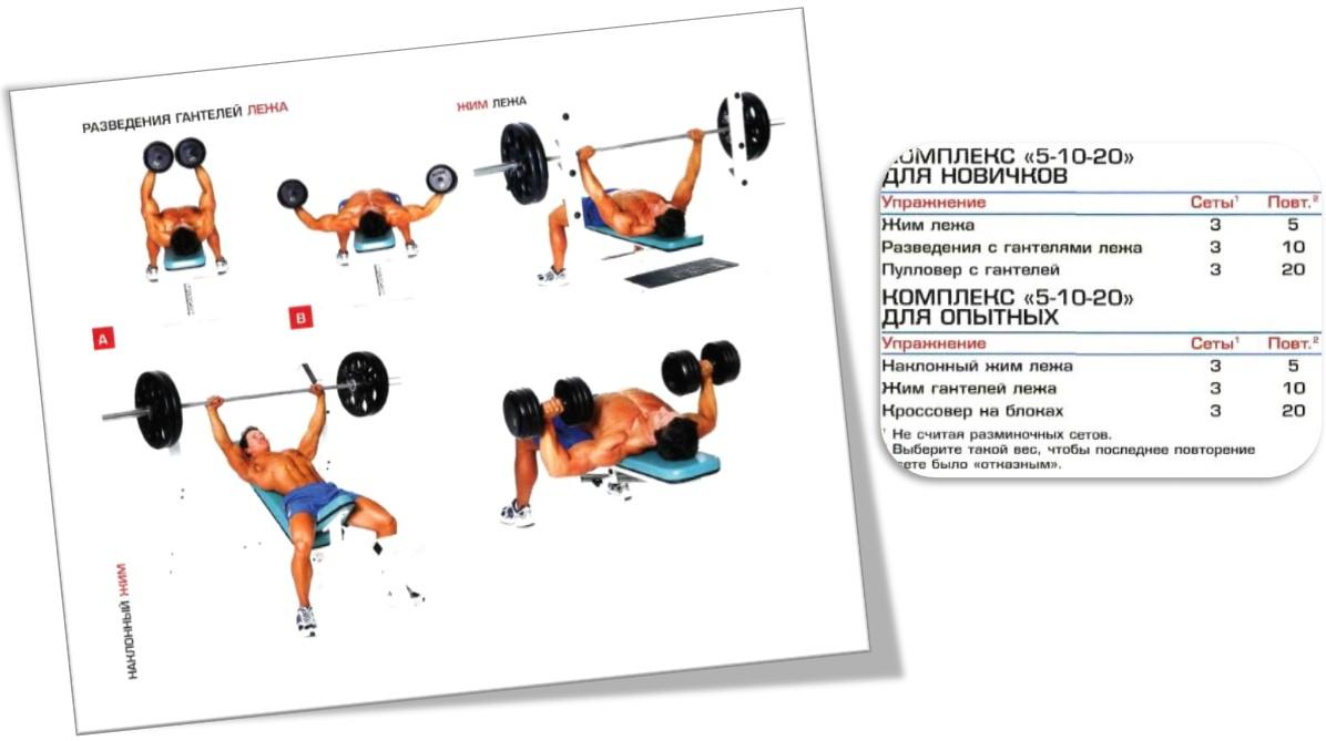 Программа тренировки груди 5-10-20