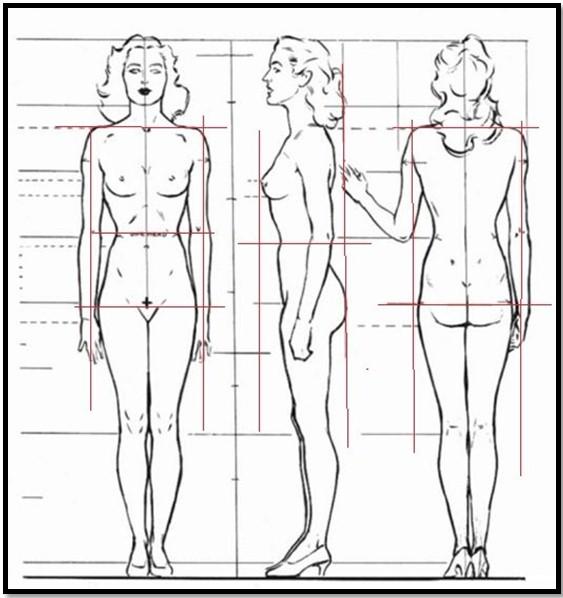 Профили человека для антропометрии