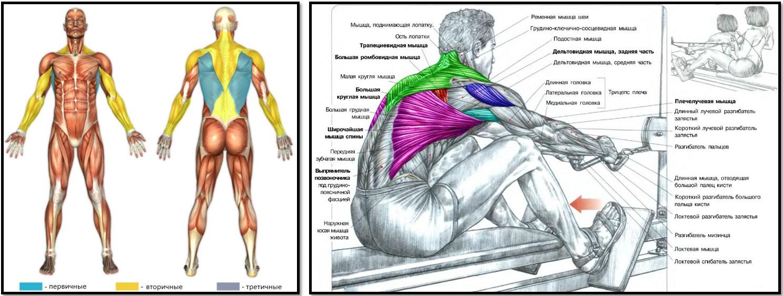 Укрепление мышц груди 14 фотография