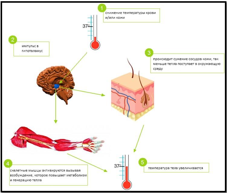 Процесс гипотермии