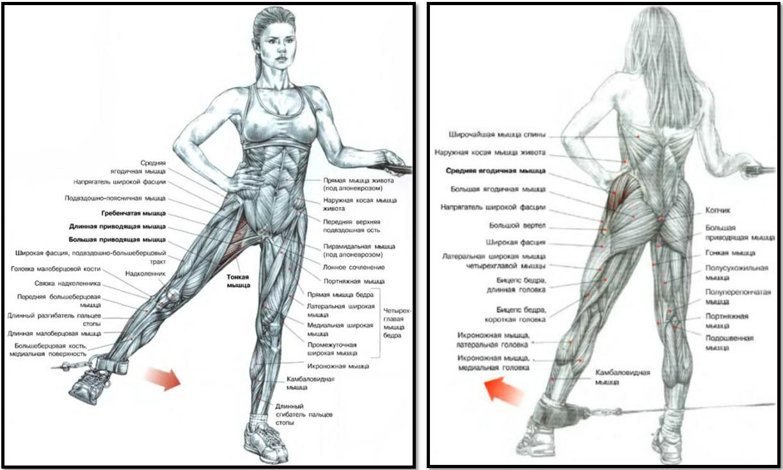 Отведение ноги в кроссовере мышцы в работе