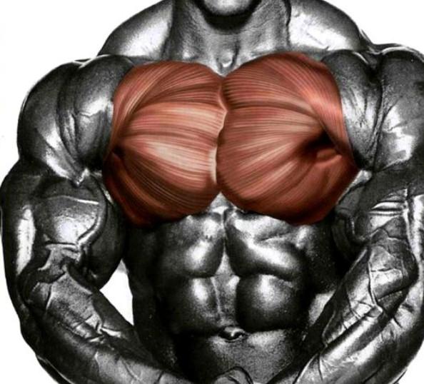 Тренинг грудных