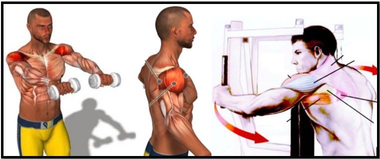 Пучки дельт и упражнения