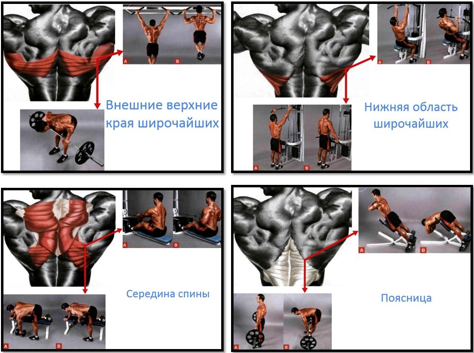Лучшие упражнения по отделам спины