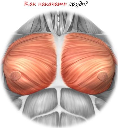 Как накачать грудь
