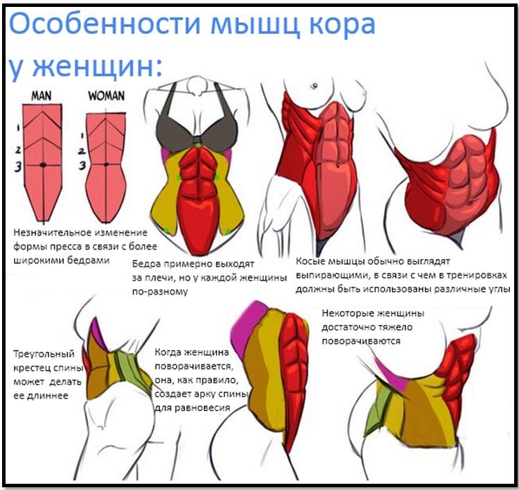 Мышцы кора у женщин