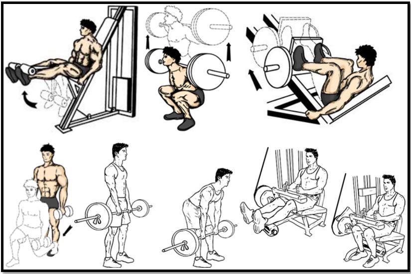тренировка ног на массу программа