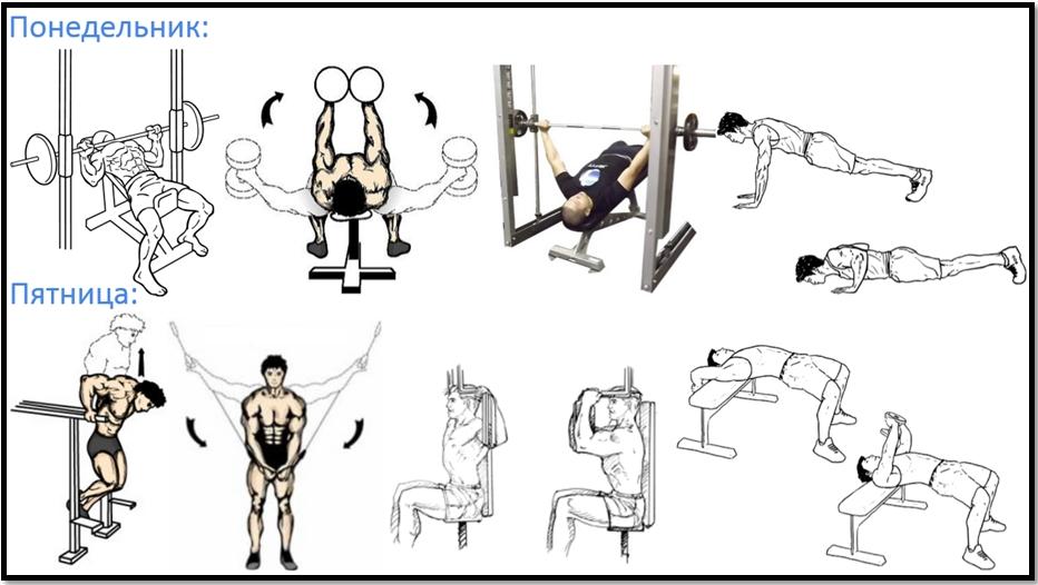 Программа тренировок груди №1 атлас упражнений
