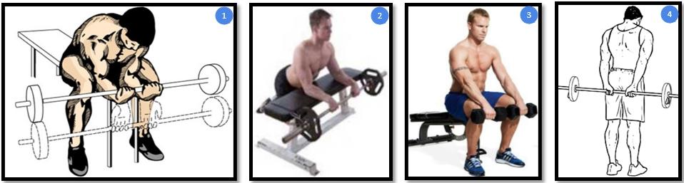 Сгибание запястий сидя со штангой на скамье. Вариации выполнения упражнения.