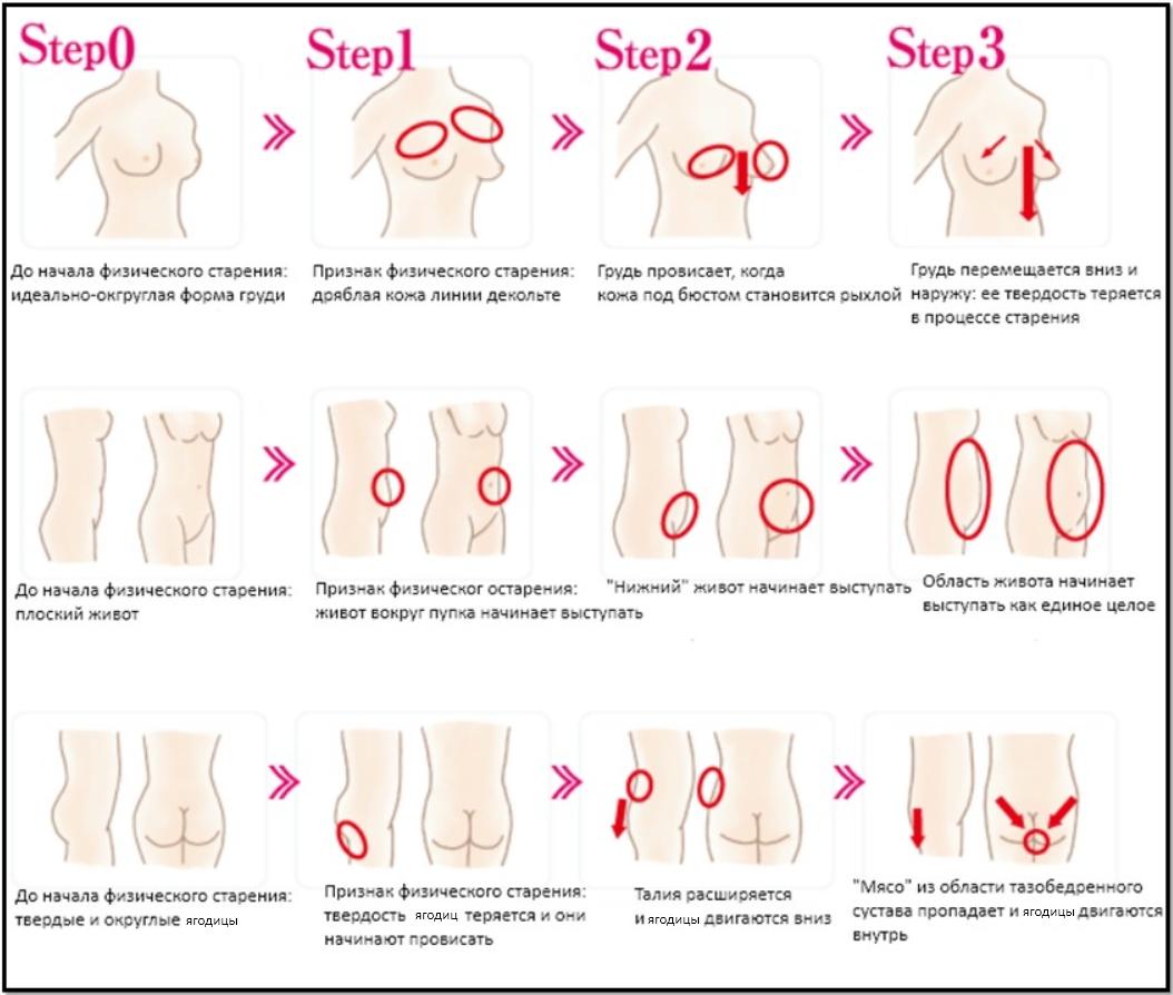 Типы женской груди фотографии 8 фотография
