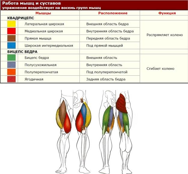 Работа мышц и суставов подъемы на опору