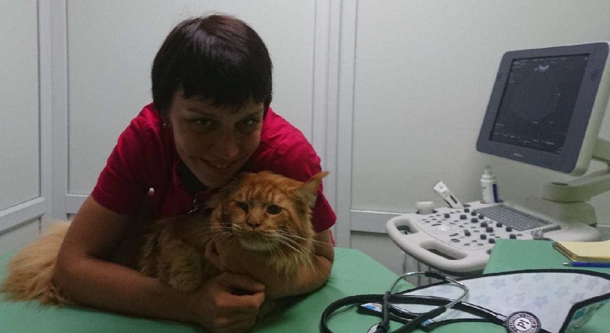кот на приеме у кардиолога