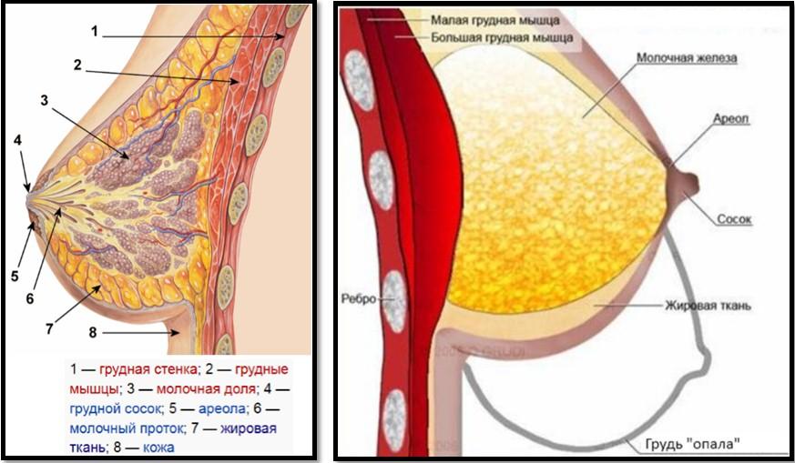 как избавиться от холестерина народными средствами чесноком