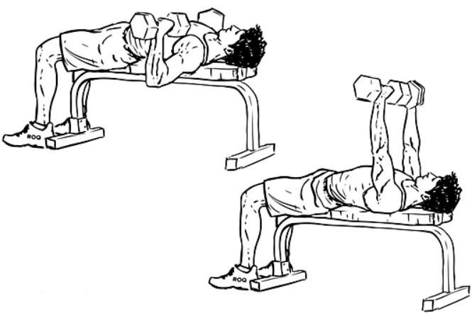 Жим гантелей лежа, техника выполнения