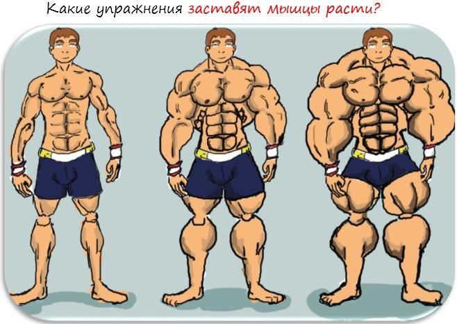 Какие они, базовые упражнения