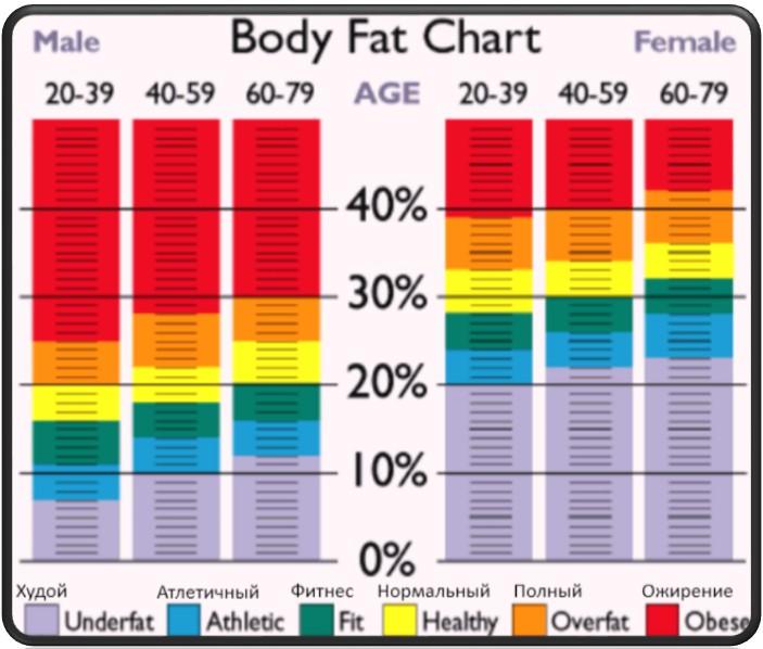 висцеральный жир на животе упражнения