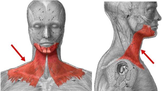 platysma-мышца