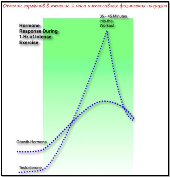 Уровень гормонов и время тренировки