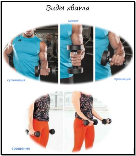 Базовое упражнение на бицепс