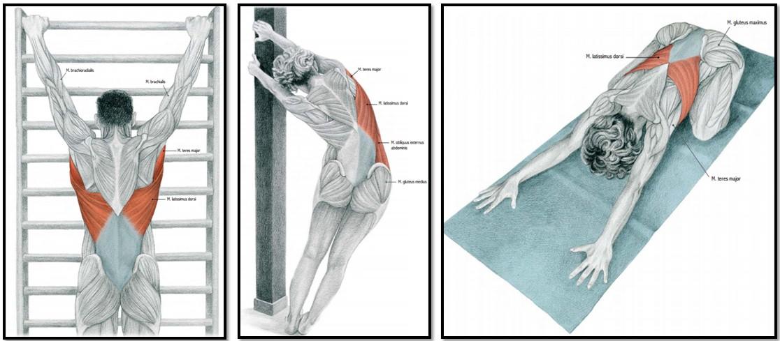 Растяжка мышц спины в домашних условиях
