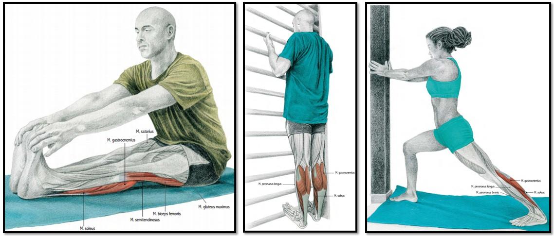 упражнения на растяжку мышц голени