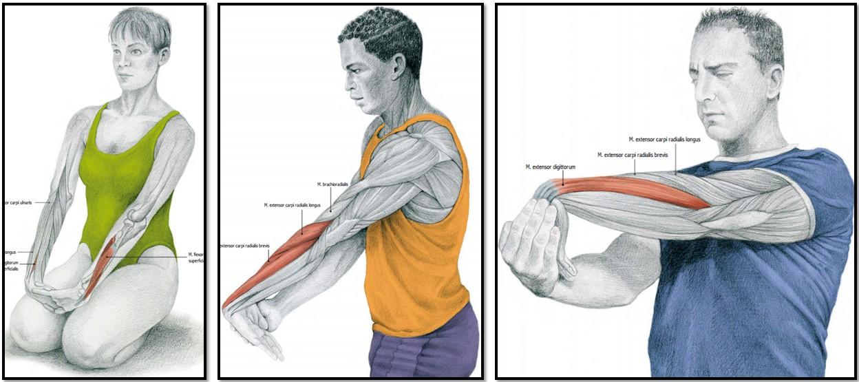 упражнения на растяжку мышцы предплечий и кистей