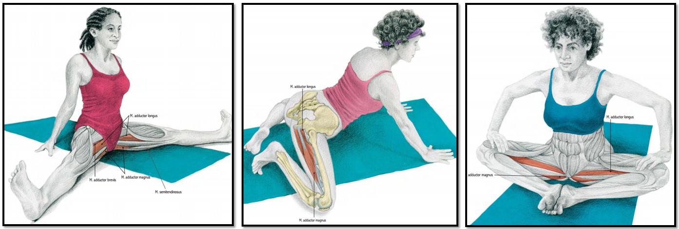 упражнения на растяжку приводящих мышц