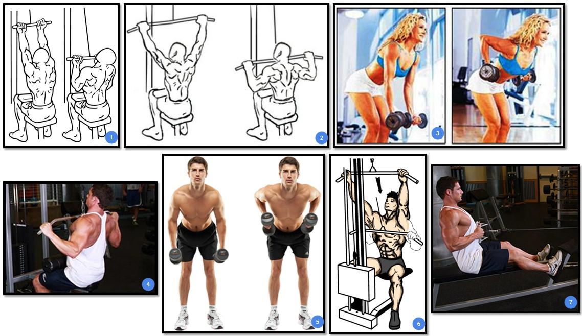 упражнения для широчайшей мышцы спины