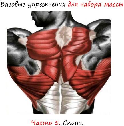 Базовые упражнения для набора массы, спина