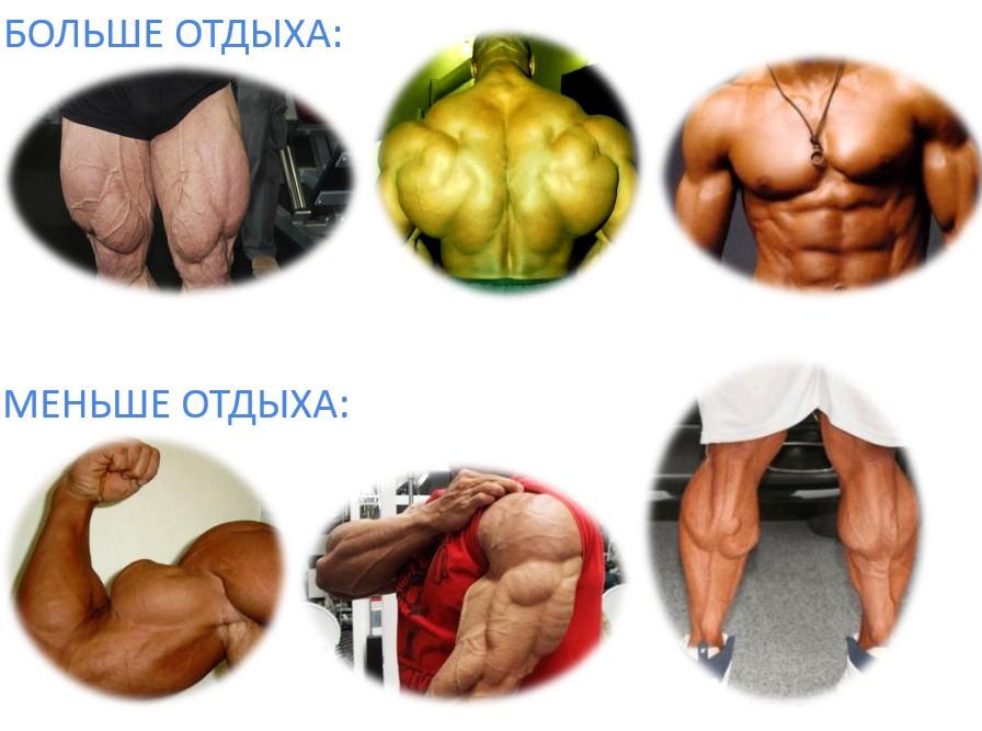 время отдыха при тренировке различных мышечных групп
