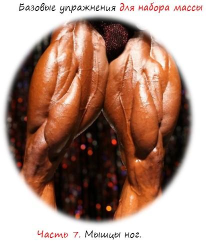 Базовые упражнения для набора массы мышц ног