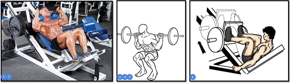 эффективные упражнения для квадрицепса