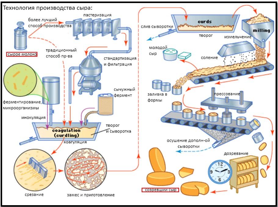 технология производства сыра