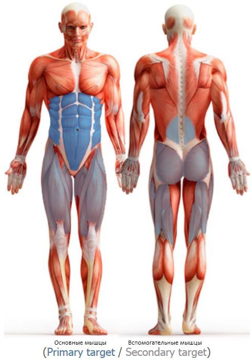 упражнение  планка,  мышцы