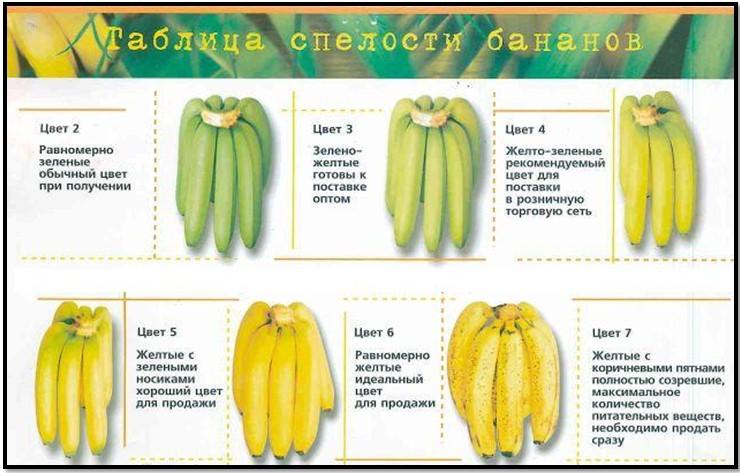 таблица спелости бананов