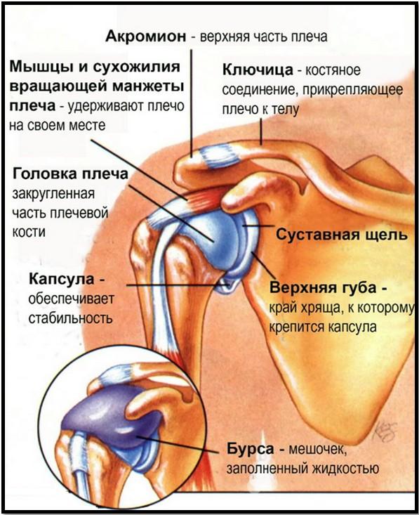 Плечевой фото