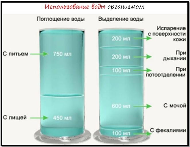 сколько лишней жидкости может быть в организме типа