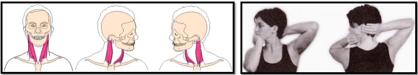 вращение шеи
