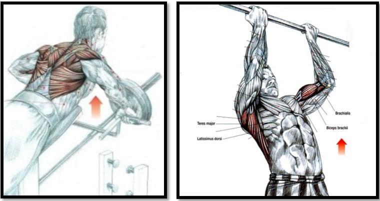 какими упражнениями убрать жир с коленей