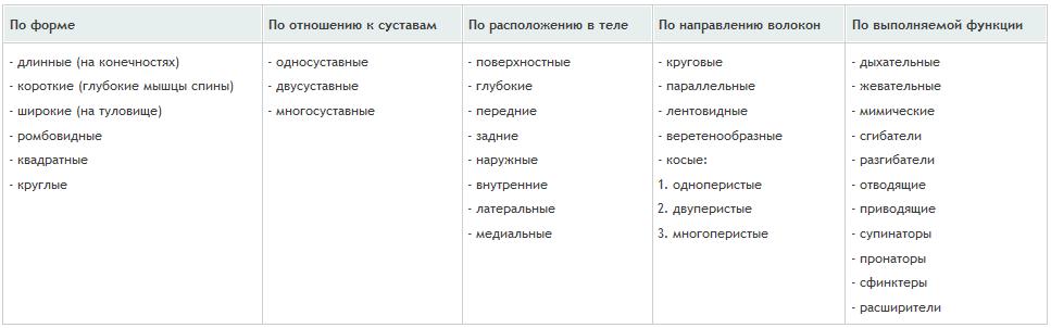 мышцы классификация таблица